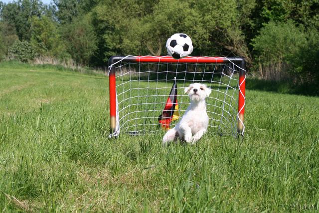 Fussballtor Für Kinder Jetzt Das Passende Fussballtor Für Kinder