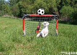 Fussball Test Ratgeber